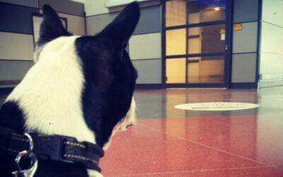 Hundträning med Jessica